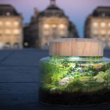 TERRARIUM-VEGETAL-BORDEAUX-
