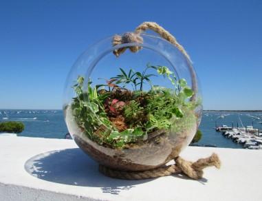 boule mini forêt Plant&Nous
