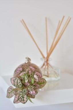 Petite boule Plant&Nous